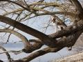 Épagneul Breton sitzend auf Baum am Ammersee