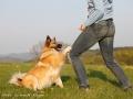 Trick – Knie antippen – Training mit Islandhund