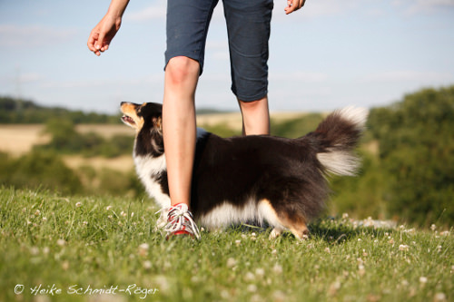 Dog Dancing mit Sheltie