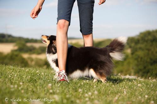 Dog Dancing mit Sheltie